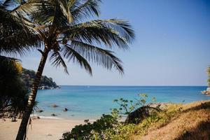 palmboom in de buurt van strand foto