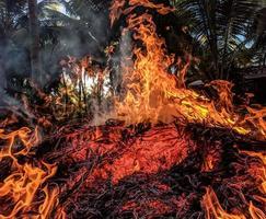 vlammen van vuur foto