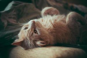 kat op kussen foto