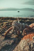 touw vastgebonden aan rotsen in knopen dichtbij strand foto