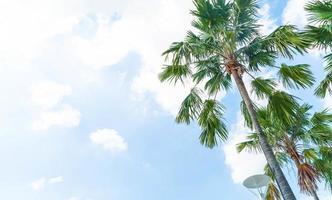 palmboom met blauwe luchten