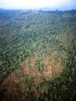 vernietiging van regenwoud foto