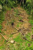 antenne van een kaal landschap met gekapte bomen op de grond foto