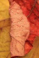 nat herfstblad met druppels foto