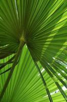 tropische palmbladeren foto