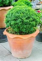 groene plant