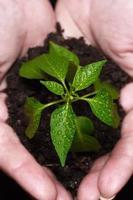 nieuw geboren plant foto