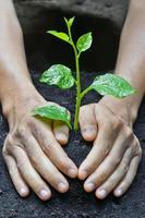 handen groeiende boom foto