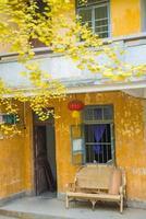 gele ginkgo buiten het huis foto