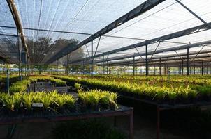 centrum voor landbouwontwikkeling foto