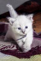 kleine kitten ontwikkelingswereld foto