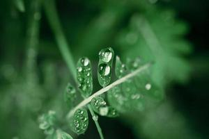 waterdruppels op het groene gras. macro