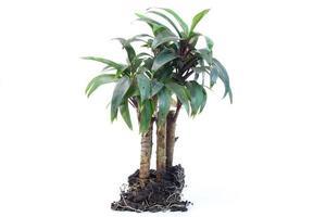 jonge plant op een witte achtergrond foto