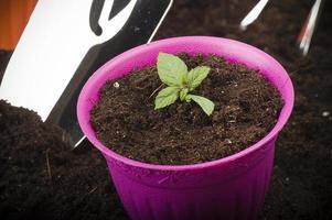 jonge plant foto