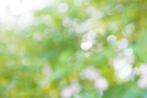 natuurlijke bokeh, wazig bokeh foto