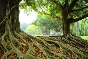 wortels van bomen foto