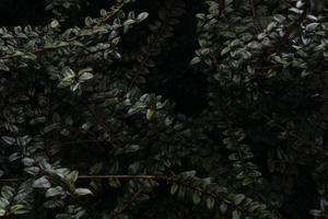 groene bladeren op stengels foto