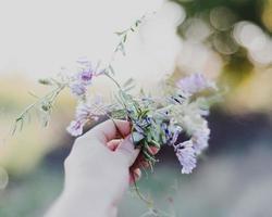paarse petaled bloem