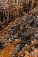 bruine planten en bomen op rotsachtige heuvel