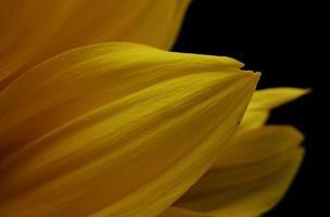 gele bloemblaadjes op zwart