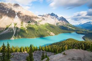 groene pijnbomen bij een meer en bergen