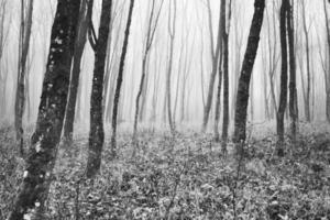 bomen in een bos