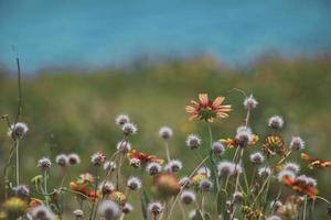 selectieve foto van bloemen bloeien