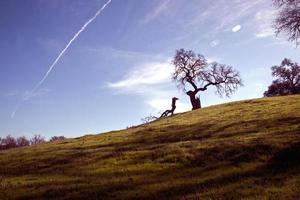 bomen op een heuvel onder de blauwe hemel