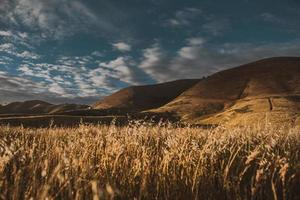 grasveld dichtbij berg onder blauwe hemel foto