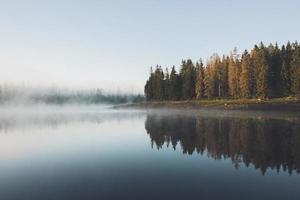 bomen weerspiegeld in mistig water