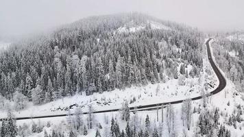 sneeuwveld met pijnbomen en weg foto