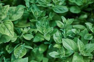 groene bladeren planten in focus foto
