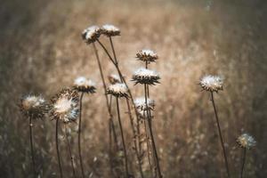 witte wilde bloemen in veld foto