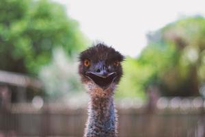 een struisvogelkop met een wazige achtergrond