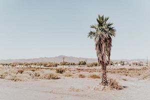 palmboom in woestijn foto