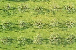 groen grasveld overdag