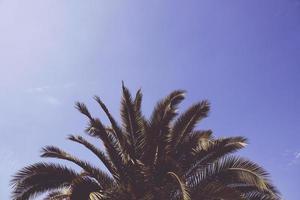 palmboom onder de blauwe hemel foto