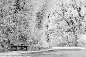 een bankje op een weg foto