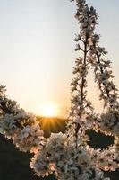 witte bloemen met zonnevlammen foto