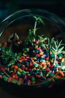 kleurrijke luchtplant kiezelstenen