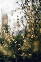 groene boom en dauwdruppels foto