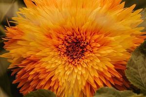 een gele en oranje bloem
