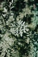 een onverzadigde groene plant
