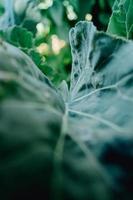 een gestructureerde close-up van een blad