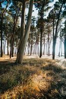 bomen in de buurt van het strand aan de spaanse kust