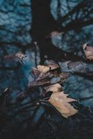 bruine bladeren op het water foto