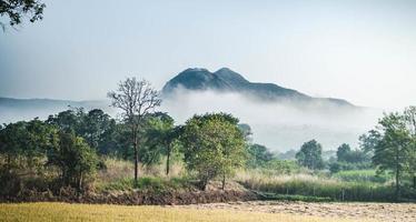 landschapsfotografie van bos foto