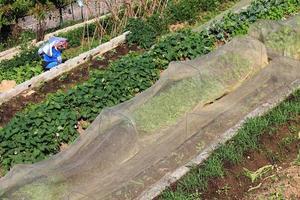 biologische landbouw foto
