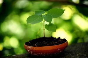 plant groeit in een kleine pot foto