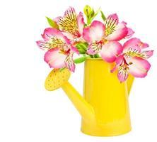 mooie bloem in een emmer geïsoleerd op wit foto